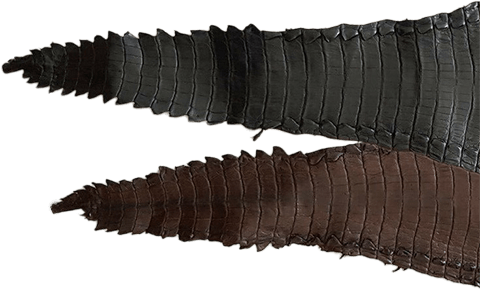 Glazed Alligator Tail Skin Leather